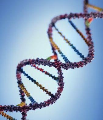 функция ДНК