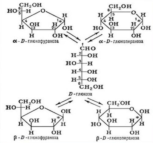Углеводы с точки зрения химии. Состав углеводов