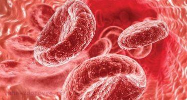 Как поддерживать нормальный уровень железа в организме